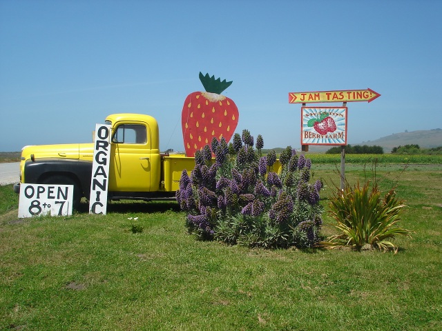Swanton Berry Farm. One of my favorite places.