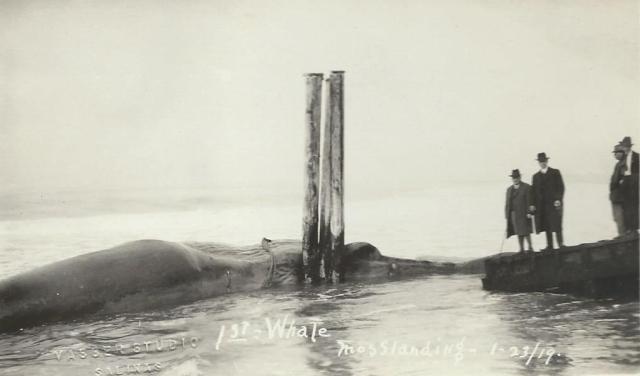 Moss Landing, CA. 1919